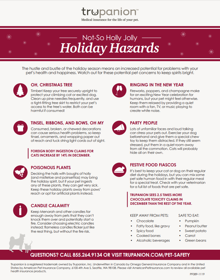 Not So Holly Jolly Holiday Hazards A Pet S Place Longmont